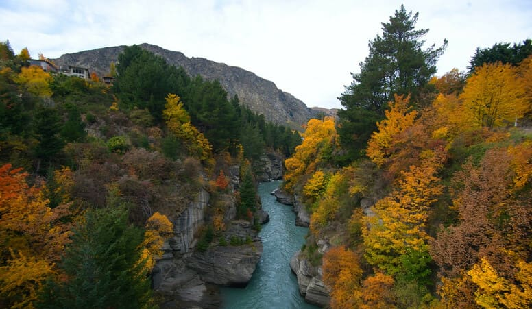 New Zealand Nature: Mountain, Colorful Trees & Water